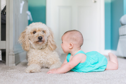 How To Prepare Your Dog for the New Baby | Helicopter Mom and Just Plane Dad