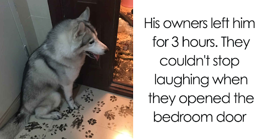20+ Hilarious Photos That Prove Huskies Are The Weirdest Dogs Ever
