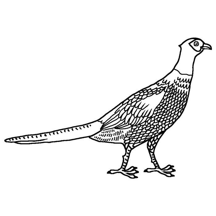 キジ雉白黒岩手県の鳥都道府県の木花鳥イラスト素材