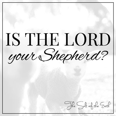 Is the Lord your Shepherd? | Salt of the earth