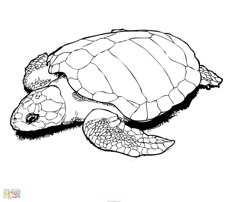 Kaplumbağa Boyama Sayfaları 9 Sınıf öğretmenleri Için ücretsiz