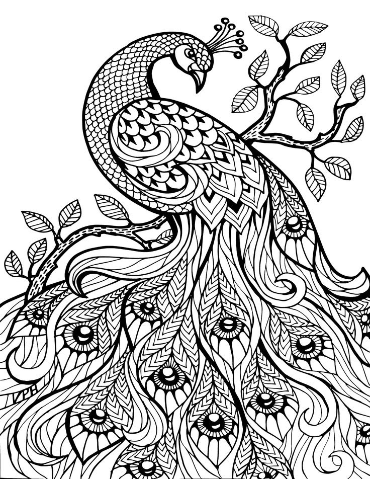 48 Free Printable Coloring Pages For Adults Pinterest Download Free Images