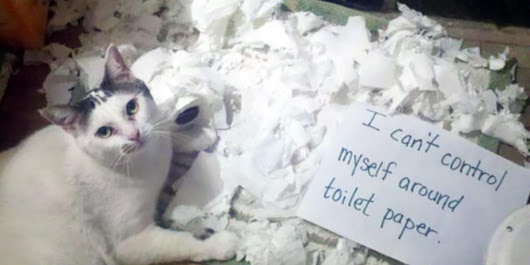 21 Hilarious Photos Of Cats Being Shamed For Their Crimes