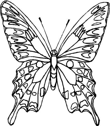 Immagini Di Farfalle Da Colorare Stampae Colorare