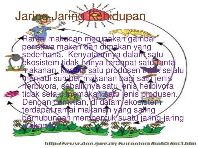 Contoh Jaring Jaring Makanan Berdasarkan Rantai Makanan ...