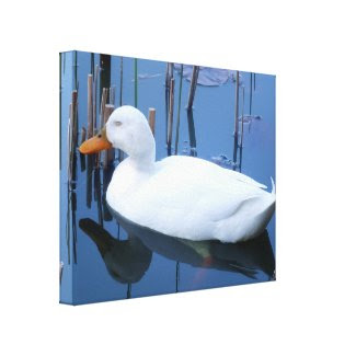 Sleeping White Duck Reflection Canvas Print