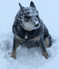 Abominable Snow Dawg