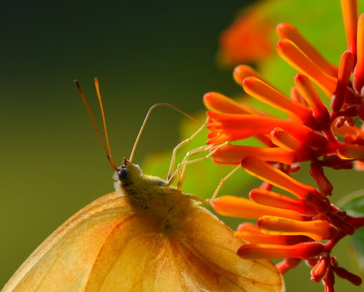 12 Tips for Backyard Nature Photography...