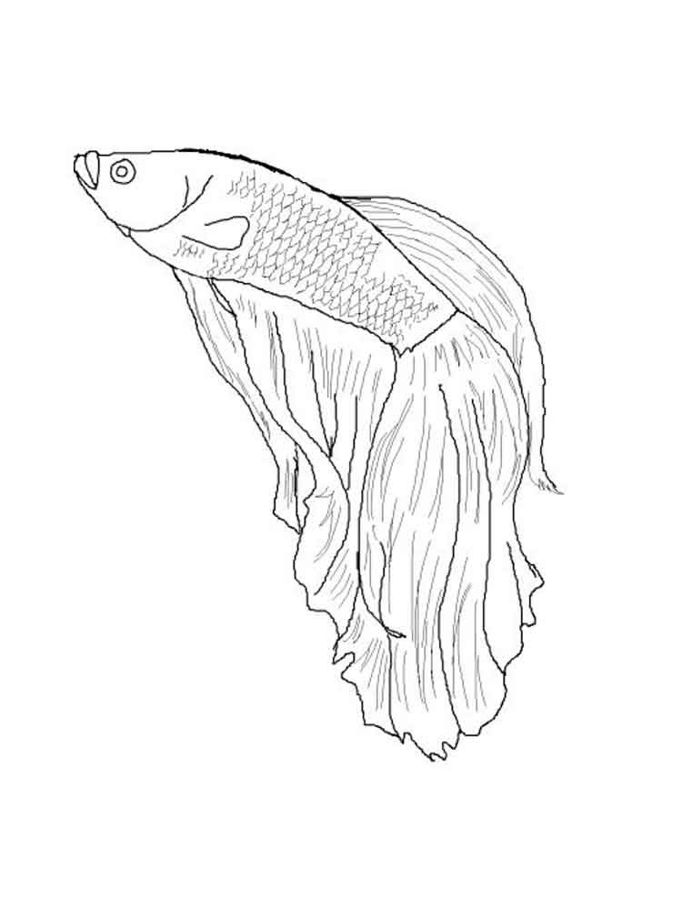 Betta fish coloring pages. Download and print Betta fish ...
