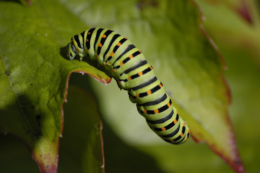 Can you hear a caterpillar munching on leaves? Well, plants can!  ~ Coffee Table Science