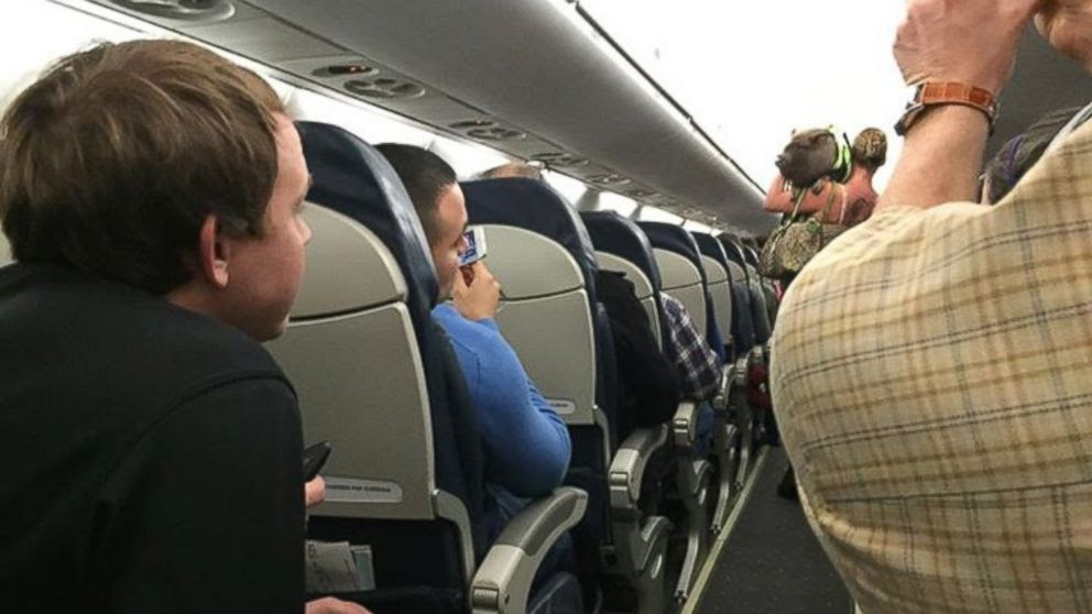 PHOTO: A passenger on a US Airways flight took this photo of a pig on the plane.