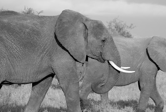 What Can Elephants Teach Us About Cancer? Trending