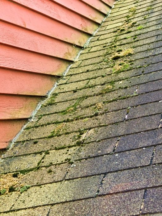 How to Clean Algae and Moss Off Asphalt Shingles - InterNACHI