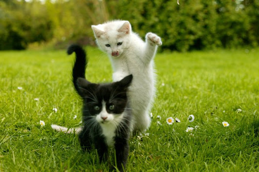 Why Kitten Socialization Is So Important - CatTime