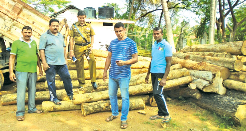 Suspects nabbed while transporting teak sans permit