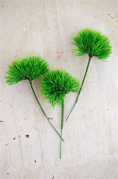 Green Trick Moss