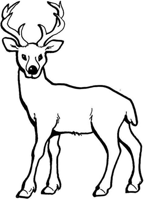 coloring pages  deer printable kids colouring pages