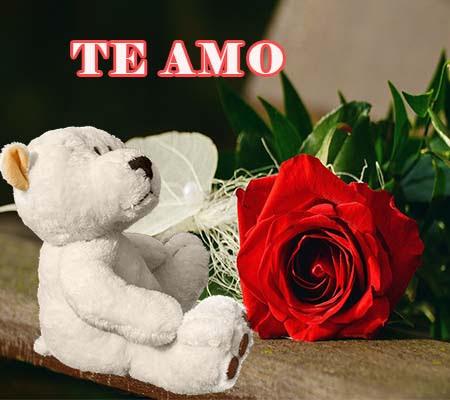 Rosas Y Ositos De Amor Rosas De Amor