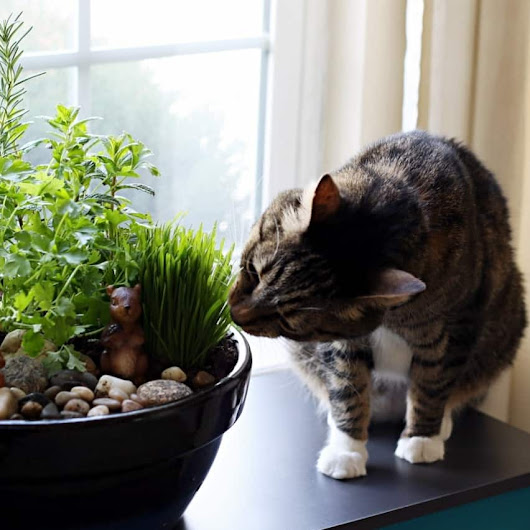 DIY Indoor Cat Garden Tutorial - The Anti-June Cleaver