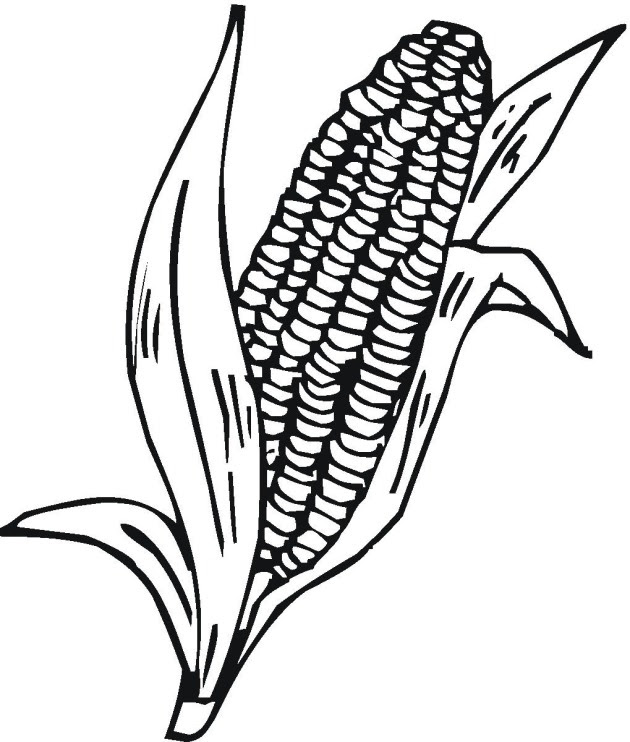 6600 Top Coloring Page Corn On The Cob Pictures