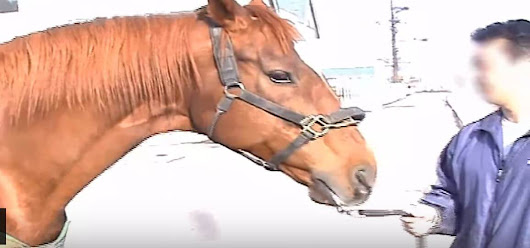 Tell Atlas Air to Stop Shipping Horses From Canada to Japan to Be Slaughtered