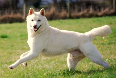white dog names  light colored dogs
