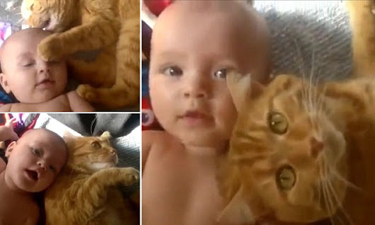 Pet cat strokes baby with its paws and curls up next to it
