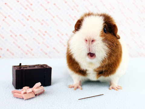 Fantastic Beasts and Where to Find Them: Lessons I've Learned from Guinea Pigs