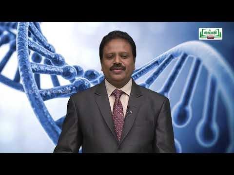 NEET  Bio Zoology  Humanre Reproduction Kalvi TV