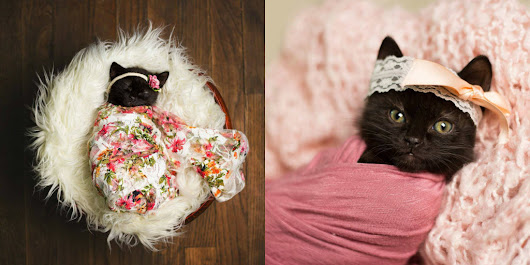 Kitten Gets Her Very Own Photo Shoot — Just Like A Real Baby