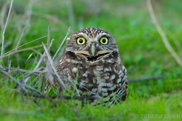 Surprise!  The owls are back!