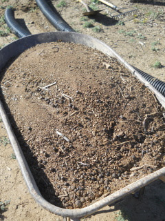 Goat Area Compost in Wheel Barrow