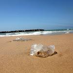 קיץ צורב: צפו באלפי המדוזות שהגיעו לביקור בחוף אשדוד - קול חי