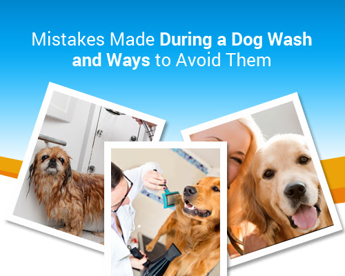 Mistakes Made During a Dog Wash and Ways to Avoid Them