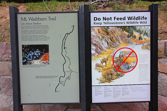 IMG_3042 Mount Washburn Trail