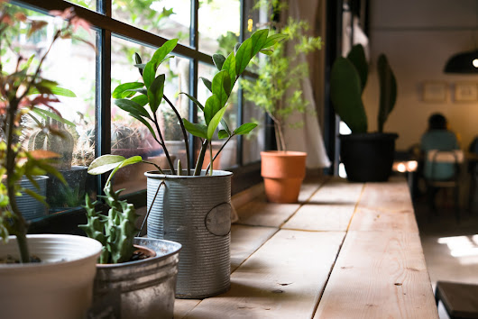 3 Unique Houseplants For Your Apartment