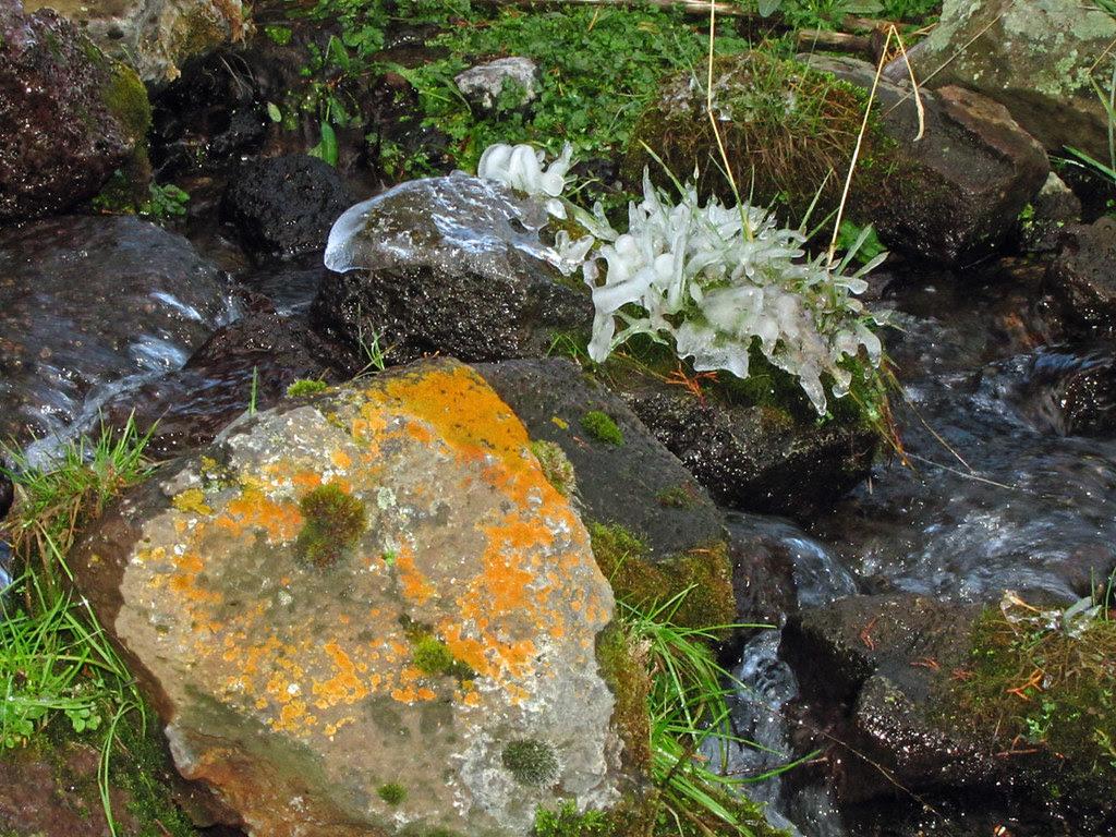 Lichen & Ice