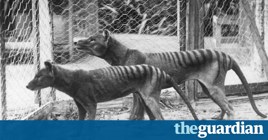 Tasmanian tiger sightings: 'I represent 3,000 people who have been told they're nuts' | Environment | The Guardian