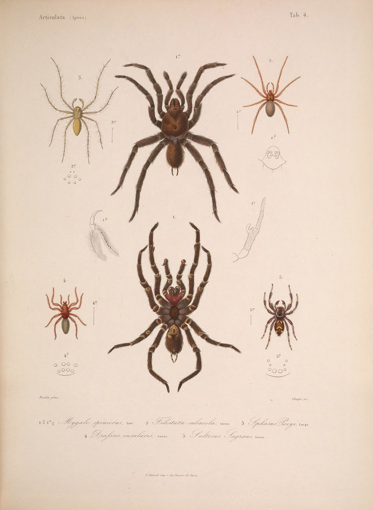natural history illustration from  Cuba 1838-1857 p