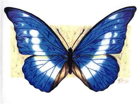 butterfly drawing clipart