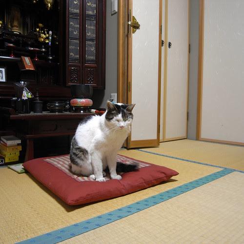 Chiba 064 by hiromy