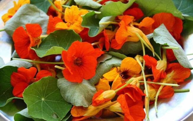 Resultado de imagem para salada de flores comestiveis