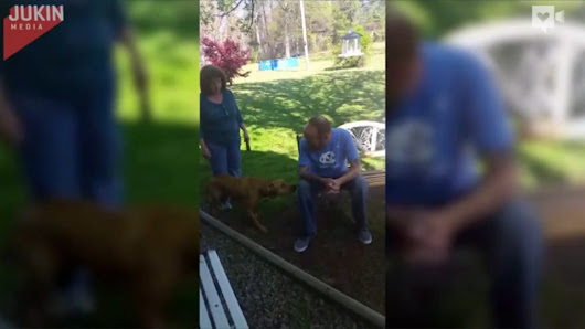 Dog finally sees owner after he's been in hospital for weeks