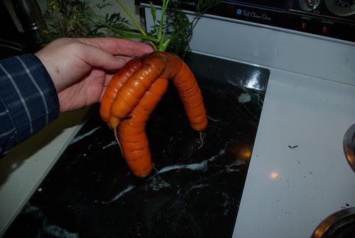 2010-11-16 Fresh carrott from garden