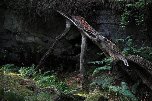 Nostalgia For Nature
