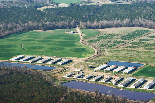NC GOP Protects Factory Farms' Right to Pollute | Civil Eats