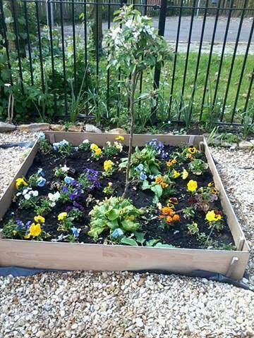 Flower Bed in my Garden
