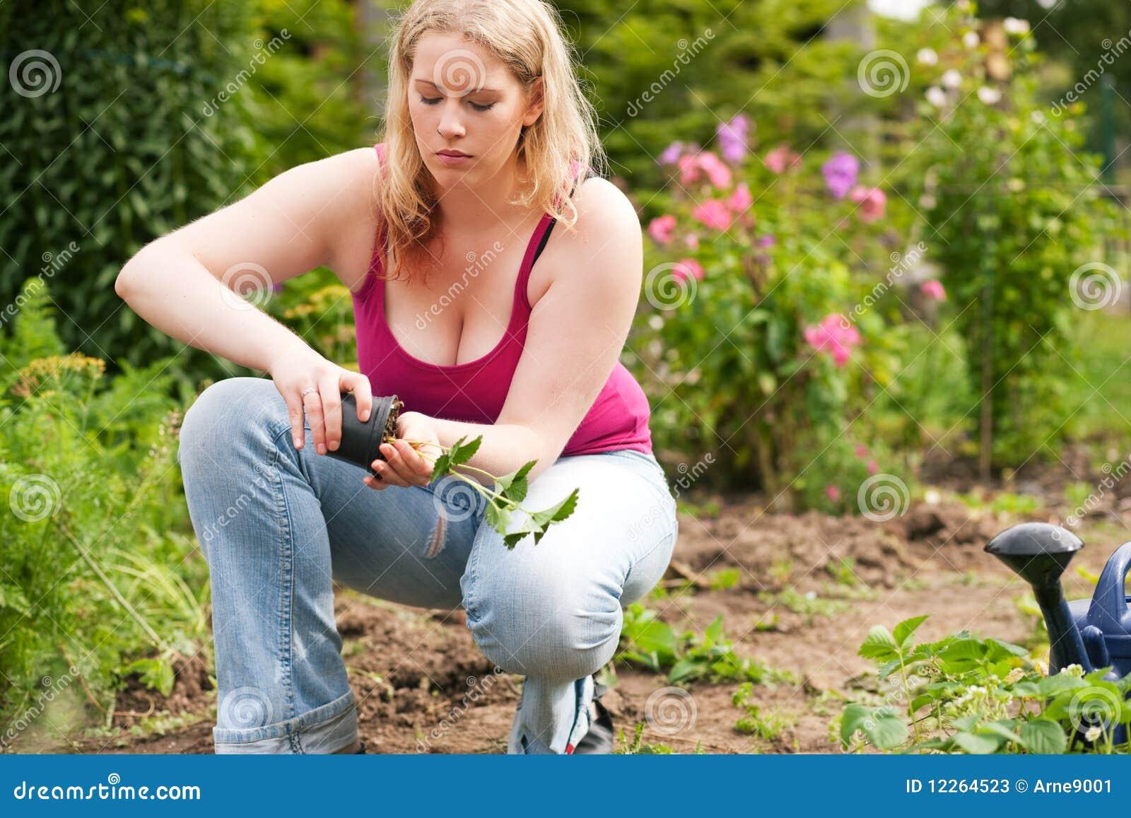 woman planting strawberries her garden 12264523