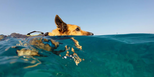 Rescued Pup Swims To A Happier Life Alongside Dolphins