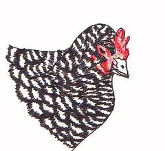 chicken feather detail
